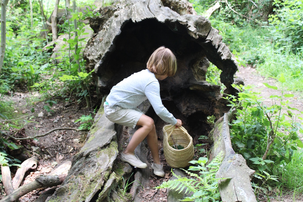 exploring a hollow tree stump
