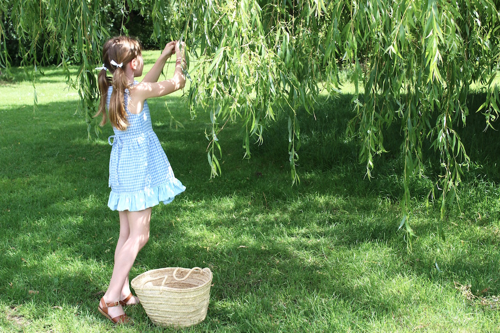 collecting weeping willow leaves