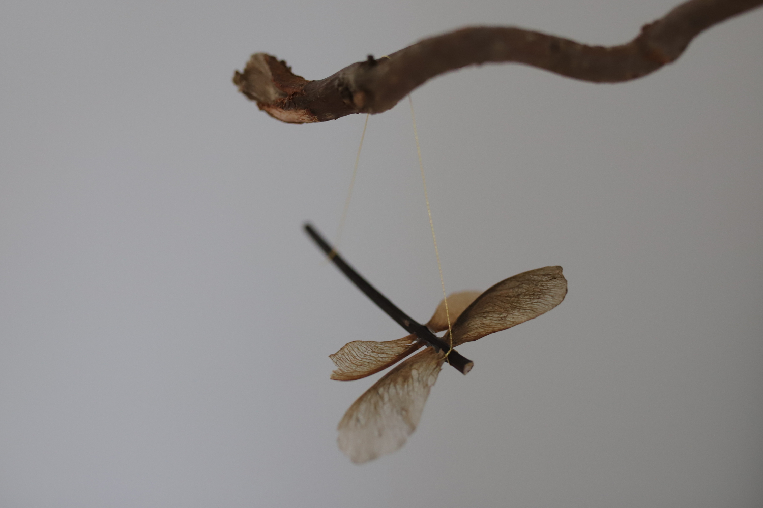 Maple seed dragonfly ornament Babyccino Kids: Daily tips, Children's